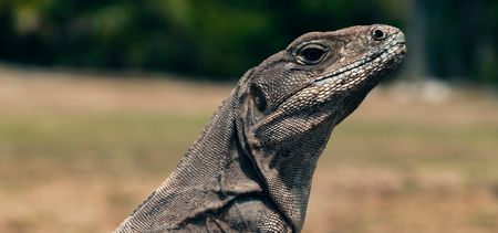 Experience the ancient age with komodo tour package