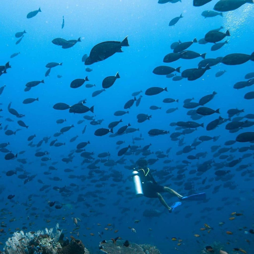 Five Common Questions about Diving in Komodo