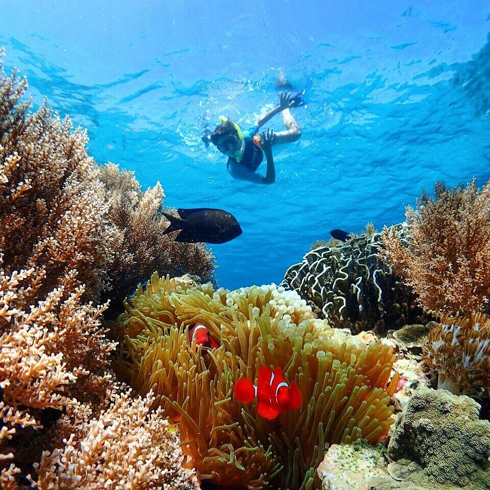Snorkeling in Komodo: What to See and Expect